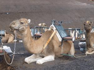 Echadero de Los Camellos. Lanzarote