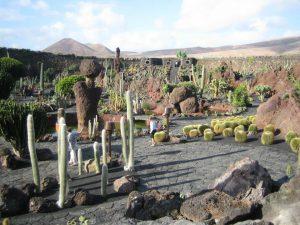 Jardin Cactus Lanzarote 2